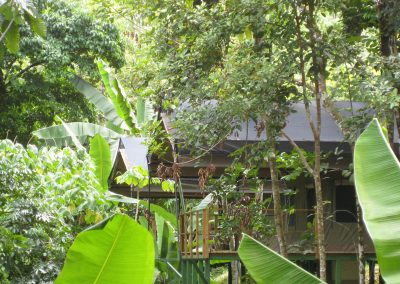 10-safari-tent-bungalow-in-the-rainforest