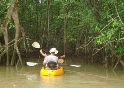 28-mangrove-kayaktour